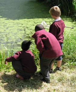 Pond dipping at Burnt Ash Pond